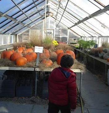 pumpkinsallandale